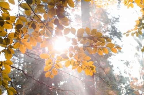 Sun burst through leaves