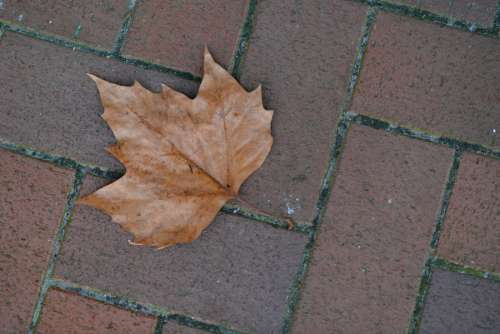 leaf on a the pavement