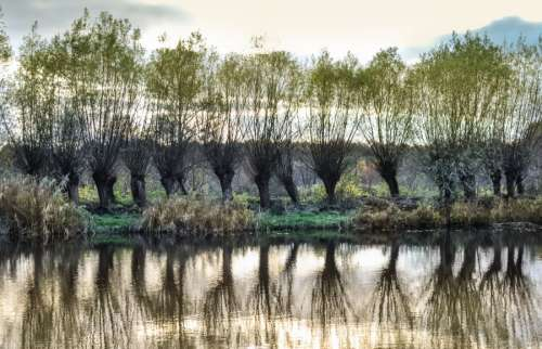 Row of trees with reflection