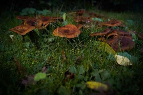 Mushrooms in the dark