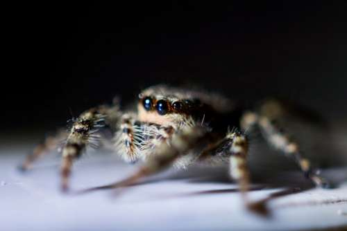 Close up from a spider