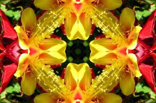 kaleidoscope design 24