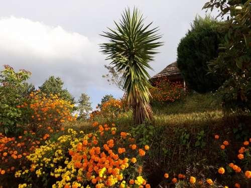Flowers at Bhaktapur