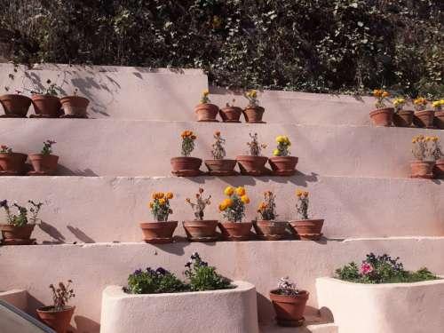 Flower management