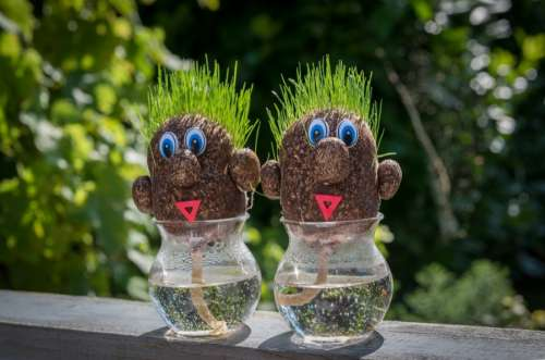 Grass brothers