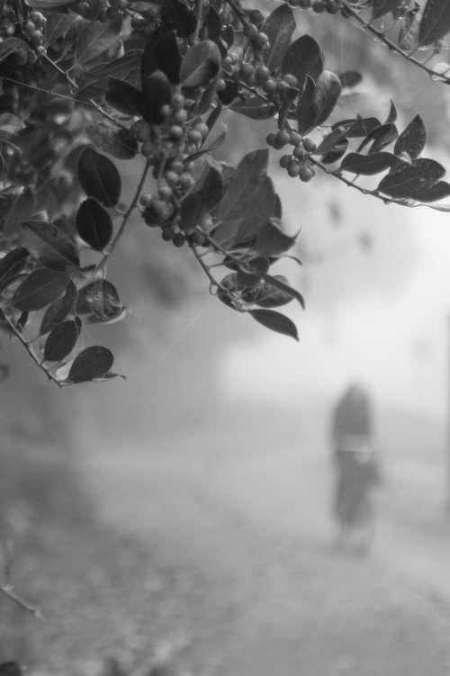 Mystery cyclist