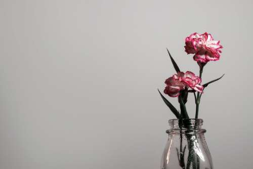 A Flower Shows It's Pink Petals Against A White Wall Photo