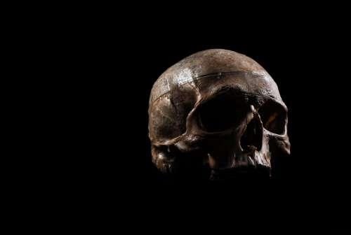 A Human Skull Floats Photo