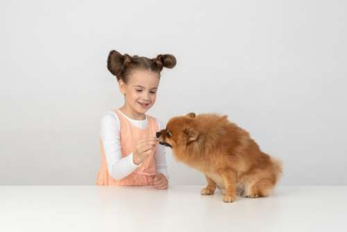 Kid Girl Giving Some Treat To A Dog