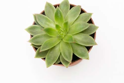 Succulent Plant In A Pot Is A Great Idea
