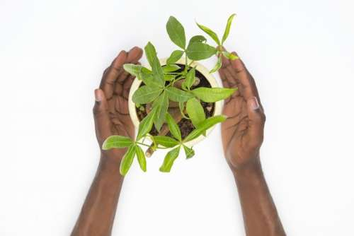 Taking Care Of Plants Is Part Of Our Human Duty