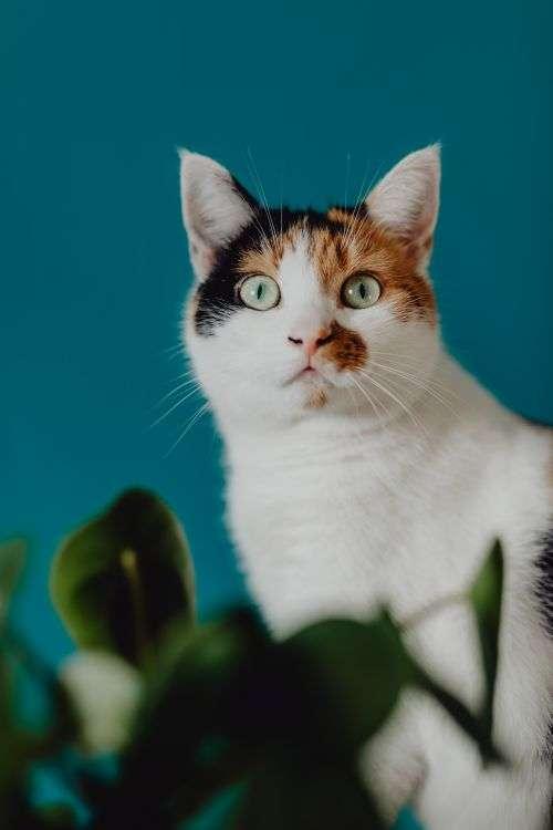 Cute tricolor cat