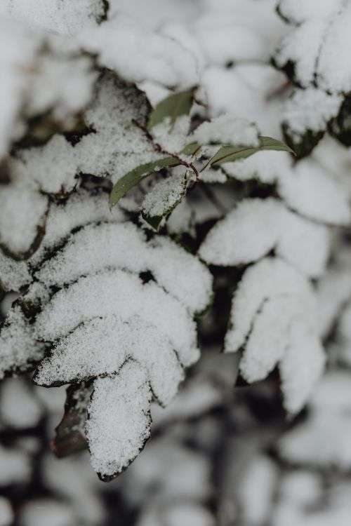 Branches covered with fresh snow