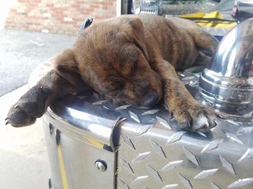 Puppy dog cute sleeping sleep