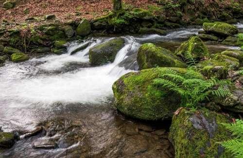 cascade stream boulder forest flow