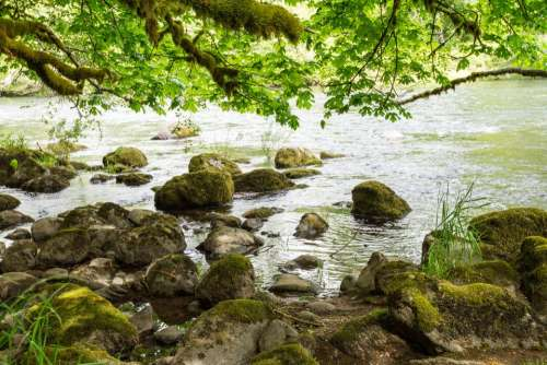 rocks stone branches water  river