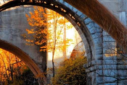 Arch Autumn tree