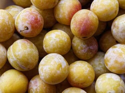food fruit cherry plum plum French plum