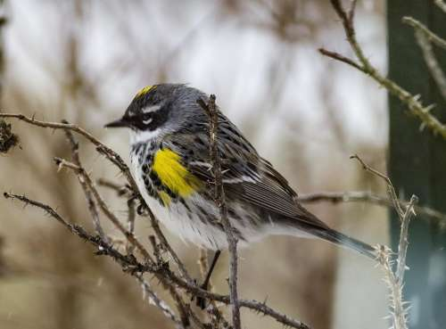 bird birds