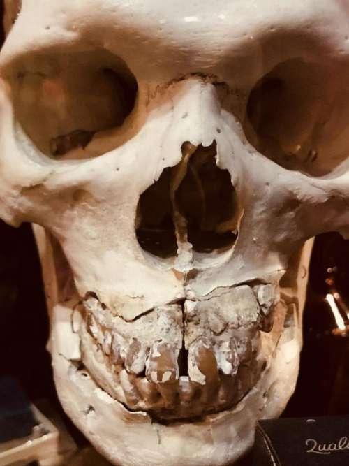 Skull death bones