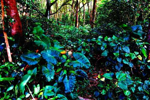 forest plant undergrowth leaves nature