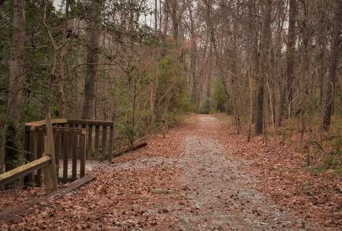 Path tree leaves park wood