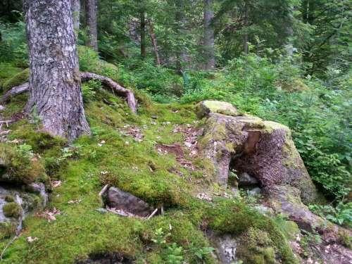 forest woods tree trees stump