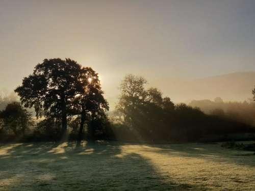 misty morning sunrise trees