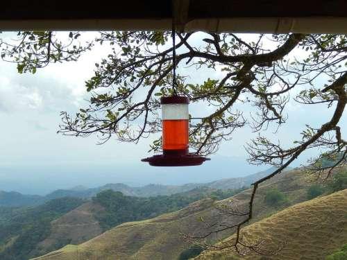 hills view tree