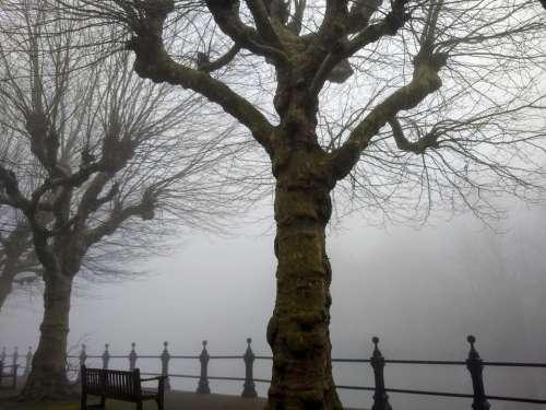 foggy morning river side thames