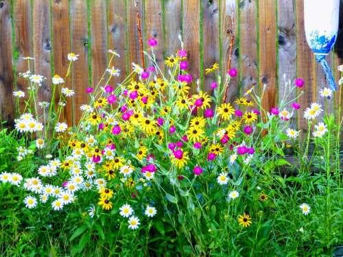 Flowers garden floral