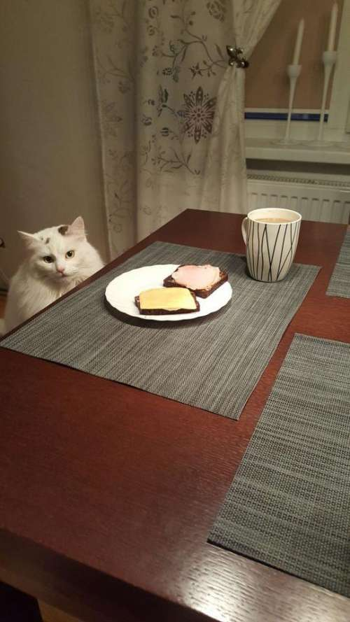 ladycat table breakfast