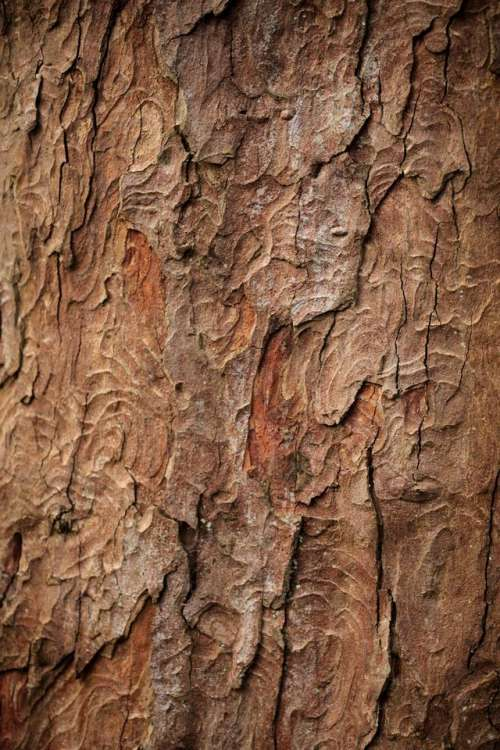 bark tree wood texture abstract
