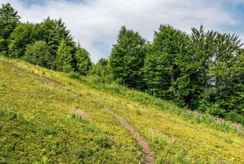 path slope forest background grassy