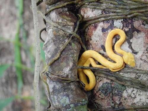 snake reptile animal wildlife