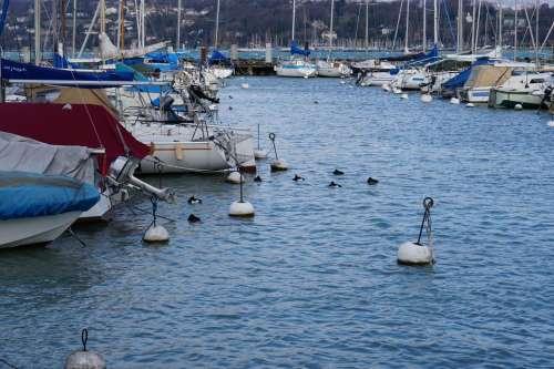 Lake harbor boats Geneva Switzerland