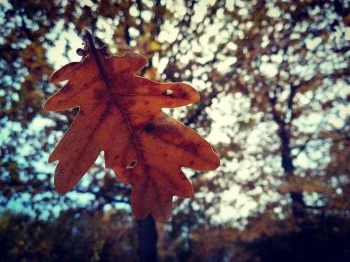 fall leaf leaves tree trees
