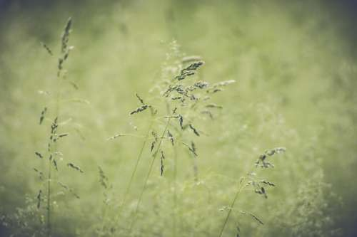 wildflower spring summer meadow grass