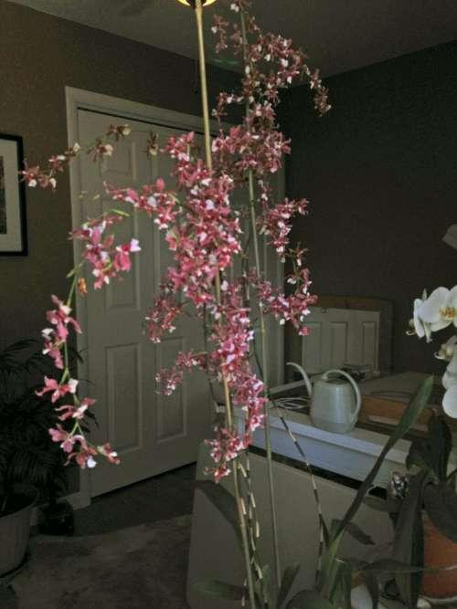 flower house plant