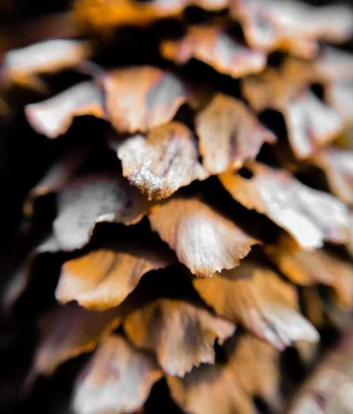Pinecone pine cone nature pattern