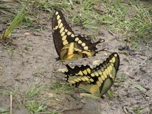 butterfly #animals