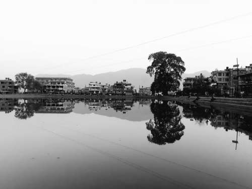 Tree lake reflection water black and white