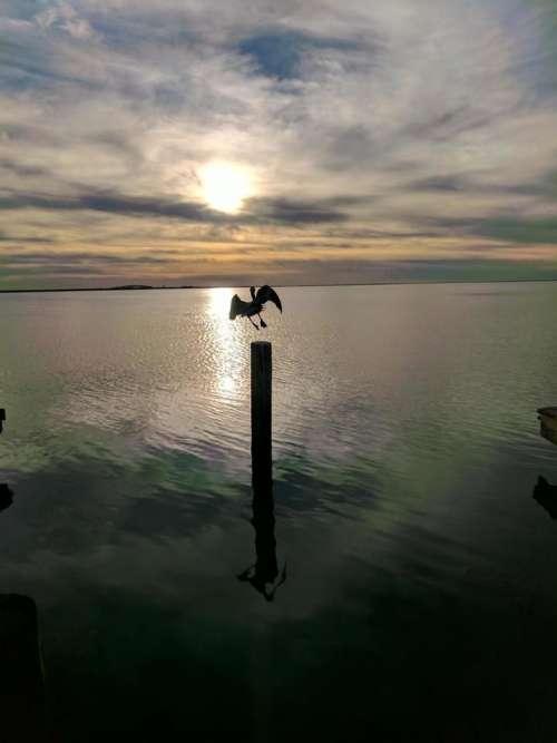 sunset bay bay sunset pelican bird