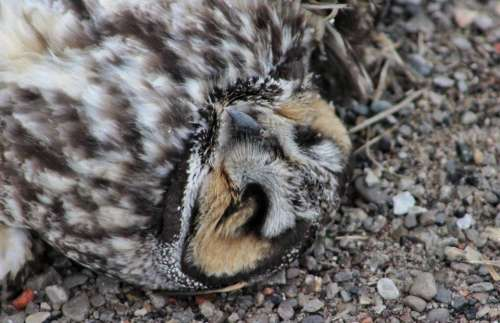 nature animal death dead bird
