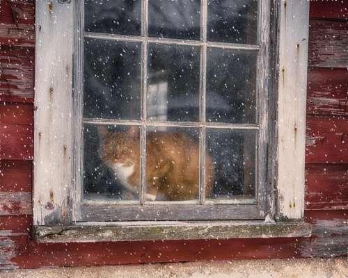 Window cat window pane