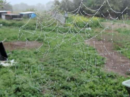 web webbing arachnid spider bug