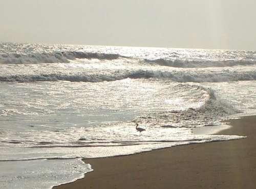 Ocean beach seashore