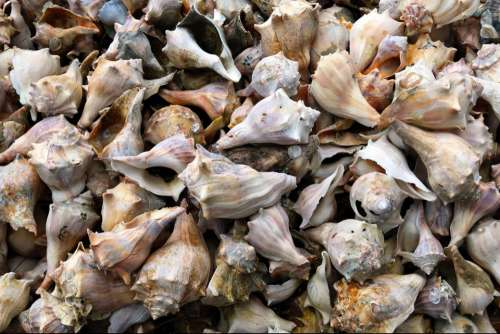 background seashell animal beach beautiful