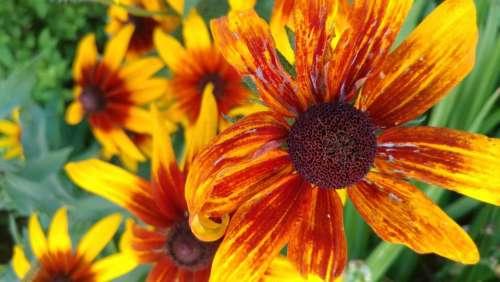flower orange yellow bloom