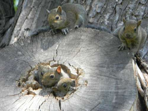 squirrel animals cute squirrels